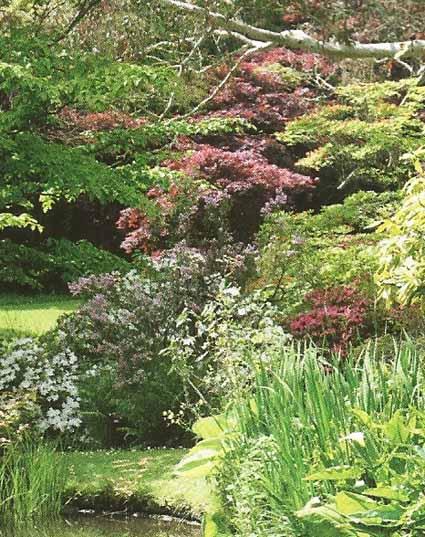 Le Jardin de Mount Usher, un exemple  parfait du jardin Robinsonnien... (Ashford - Wicklow)
