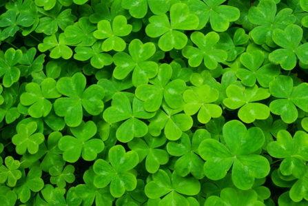 Le Monde va devenir Vert…