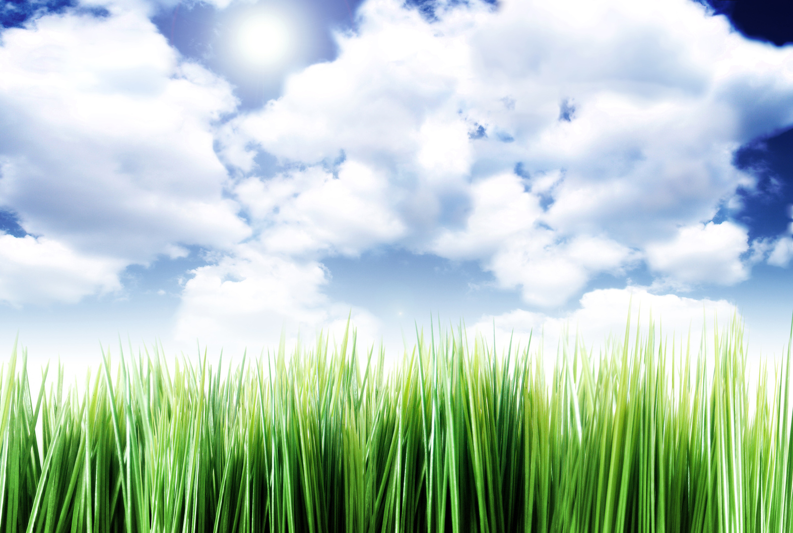 herbe et ciel